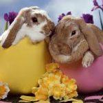 Easter Study Arrangements